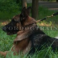 New Choke Dog Collar for German Shepherd of High-Quality Leather