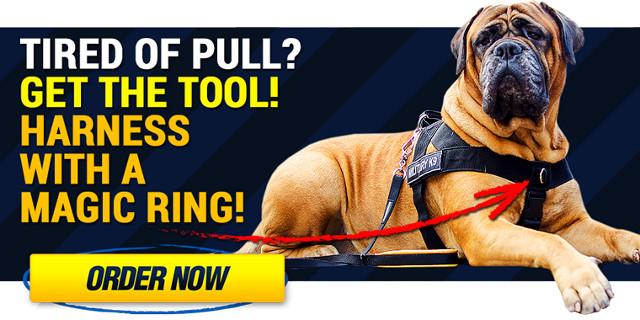 Desginer Dog Collars UK