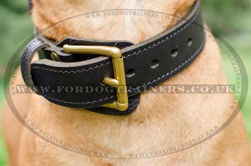 2 Ply Leather Dog Collar with Buckle