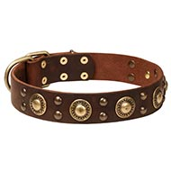 Strong Stuff Dog Collars with Brass Decorated Style