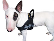 Nylon Dog Harness for English Bull Terrier | No Pull Dog Harness