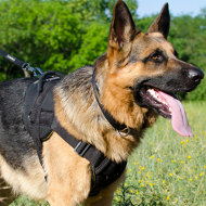 Dog Harness for German Shepherd | Walking Dog Harness for Sale