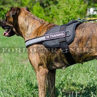 New Reflexive Nylon Dog Harness for Boxer Dog Training
