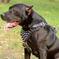 Gorgeous Style - Spiked Leather Dog Harness for Pitbull