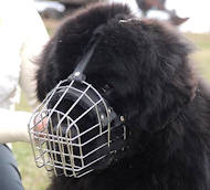Wire Basket Dog Muzzle for Newfoundland | Newfoundland Muzzle
