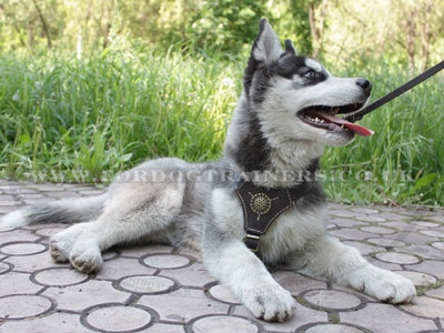 Husky Puppy Harness with Soft Lining