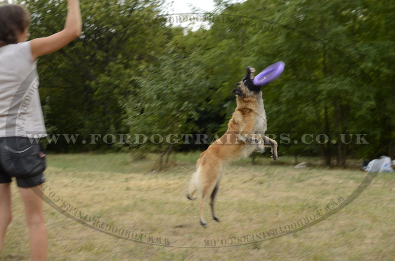 how to teach a dog to play frisbee