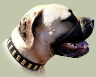 Bullmastiff Collars for Elegant Style of Your Dog ▍▍