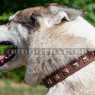 Husky Collar UK New Design | Studded Leather Dog Collar