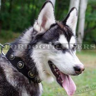 Husky Dog Collar Leather with Studs | Soft Leather Dog Collar