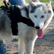 Husky Harness UK Best Choice | Husky Sled Harness