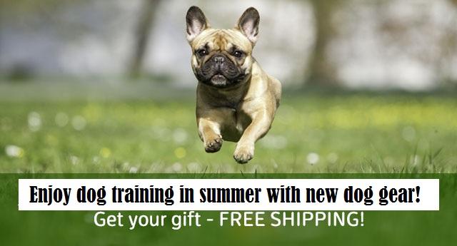 09/03-04/2018 Newsletter: FREE SHIPPING : Dog muzzle, dog harness