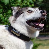 Husky Collar with ID | ID Collar for Dogs Comfort and Safety