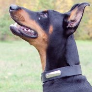 Dog Collar with ID | Doberman Collars with ID Tag Plate