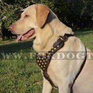 Labrador Harness Brass Studded | Walking Harness for Labrador