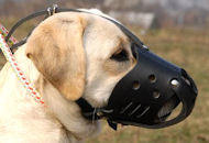 Dog Muzzle for Labrador | Daily Leather Dog Muzzle