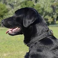 Dog Collar for Labrador Training | Choke Dog Collar for Labrador