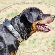 Large Dog Collar for Strong Dogs Like Rottweiler
