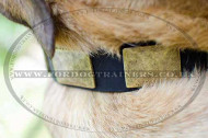 Large Dog Collar for Cane Corso Italiano