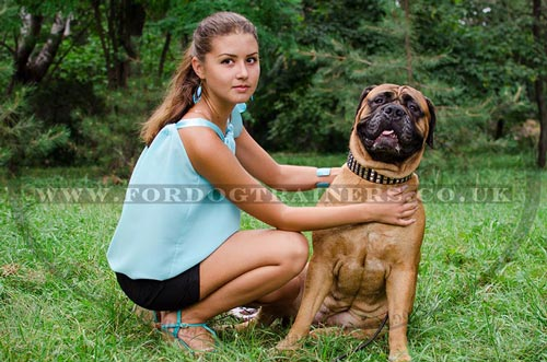 Bullmastiff Dog Accessories