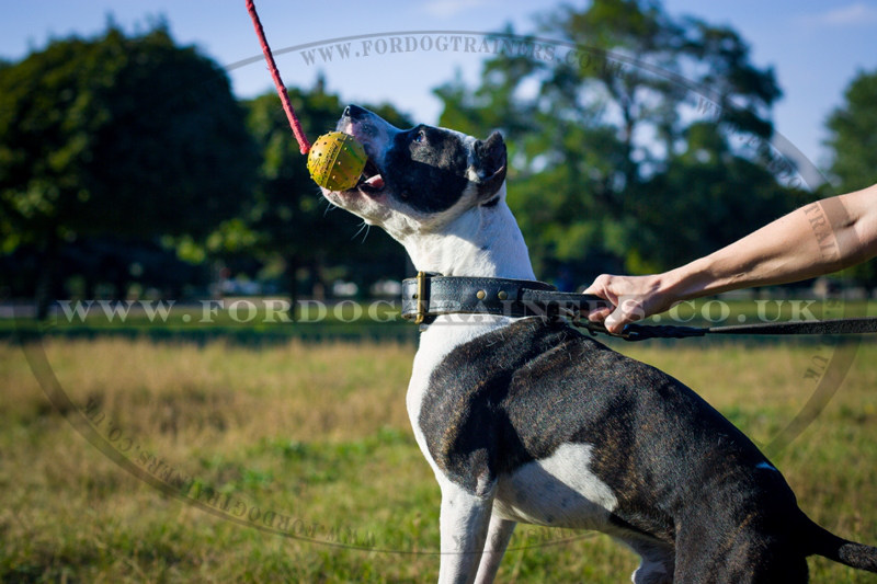 Rubber Dog Ball Bestseller