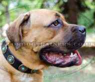 Designer Dog Collar for Mastiff | Large Leather Dog Collar