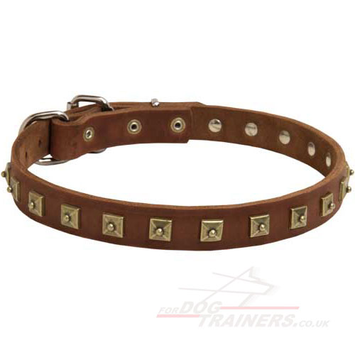 1 Inch Dog Collar Brass Studded Leather