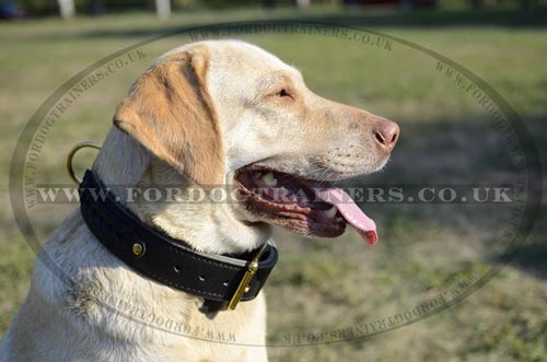2 Ply Leather Dog Collar for Labrador | Large&Strong Dog Collar