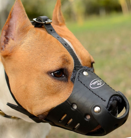 staffordshire bull terrier muzzle leather muzzle for staffy