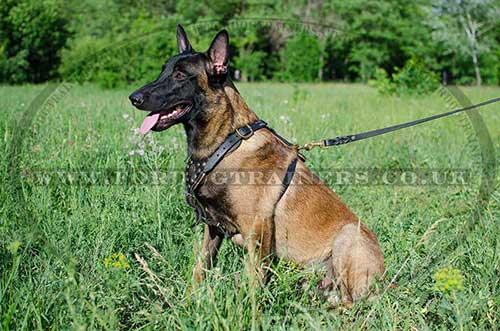 Belgian Malinois Harness for Dogs | Leather Dog Harness for Sale