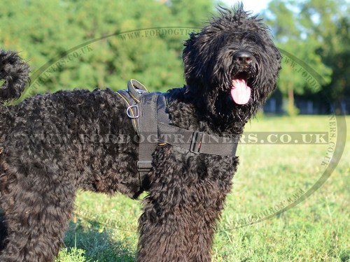 Black Russian Terrier Harness with Handle for Multi-Purpose Use