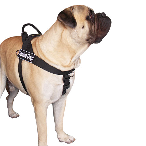 Bullmastiff dog nylon  harness UK