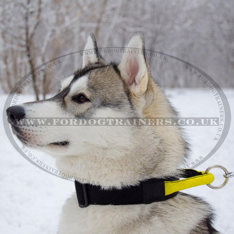 Durable Nylon Dog Collar For American Bulldog