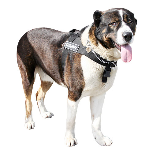 Stop Dog Pulling Large Dog Harness