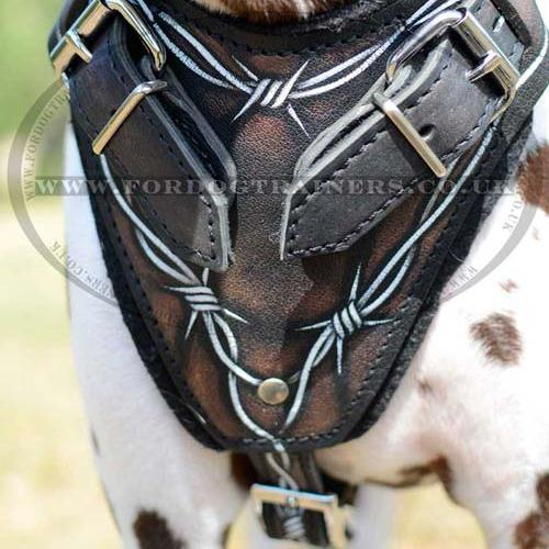 Surprising Gorgeous Dog Harness Wire For Dalmatian Training H1Bw1052 Painted Wiring 101 Archstreekradiomeanderfmnl