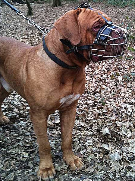 muzzles for dogs