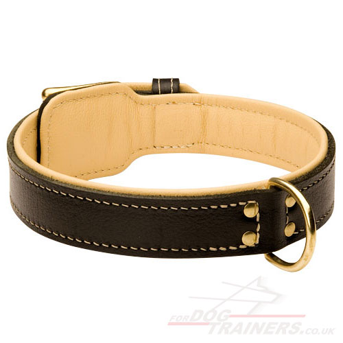 Handmade Large Padded Dog Collar with Buckle