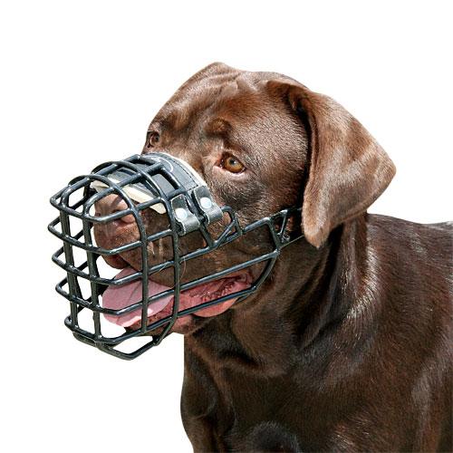 Labrador Muzzle For Training