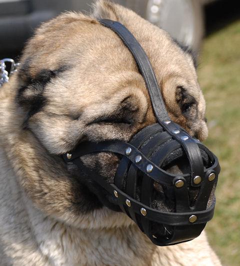 leather dog muzzle. Comfortable Light Leather Dog Muzzle for Caucasian  Shepherd
