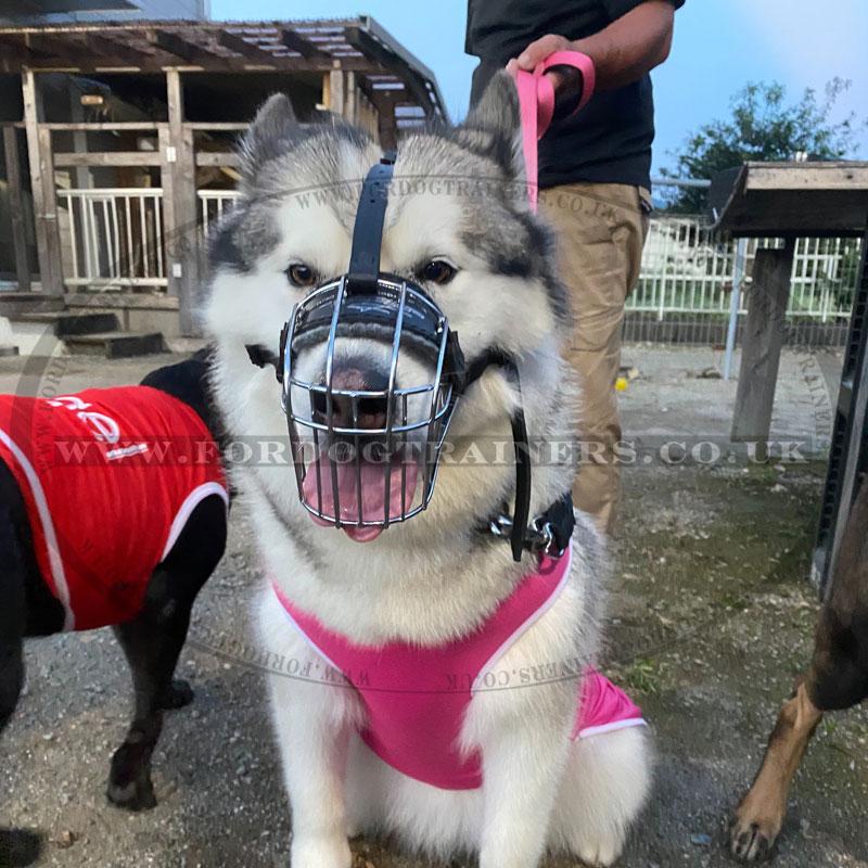 Padded Husky Muzzle Basket