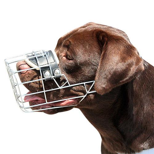 Dog Muzzle For Labrador