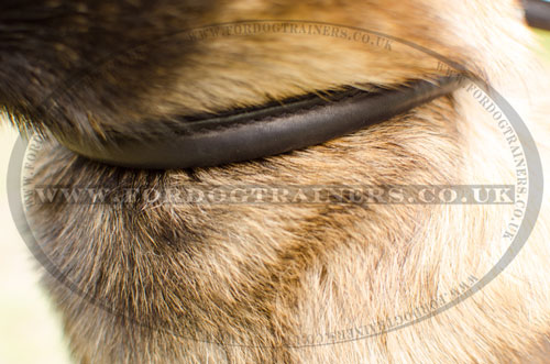 """Light Air"" Rolled Leather Choke Dog Collar for Belgian Malinois"