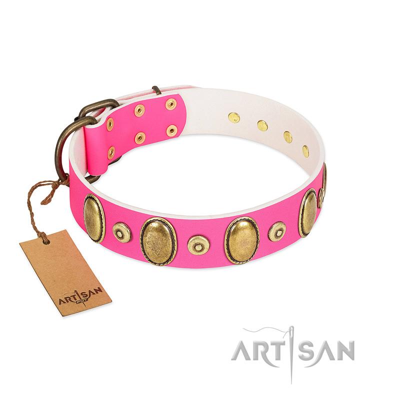 Nylon Dog Collar with Buckle