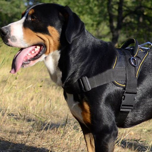 The Greater Swiss Mountain Dog Training Harness UK Bestseller - Click Image to Close