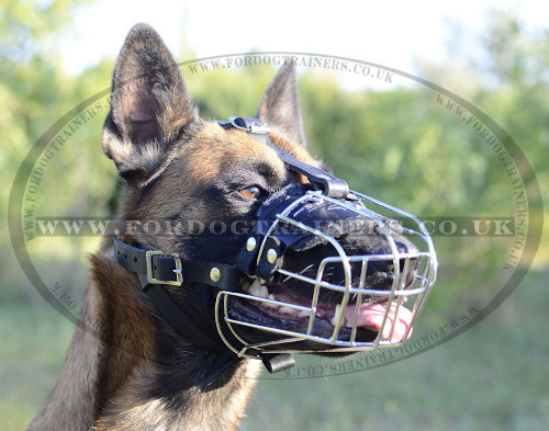 The Most Comfortable Belgian Malinois Muzzle Size