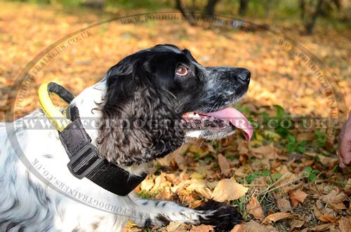 The Best Collar for Springer Spaniel with a Handy Grip