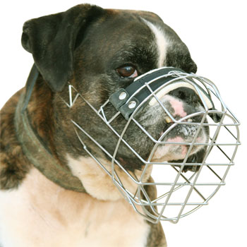 Buy Boxer Dog Muzzle that Allows Dogs to Drink and Pant