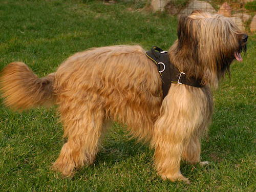Briard Harness UK Bestseller | Nylon Dog Harness with Handle