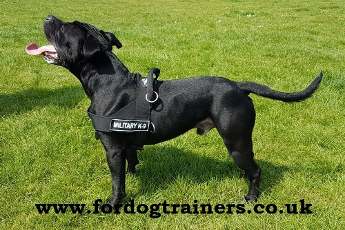 Non-Pull Dog Harness for Staffordshire Bull Terrier