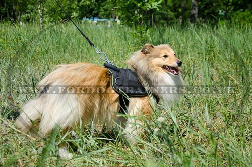 Nylon Dog Harness for Sheltie - Comfort, Reliability & Control